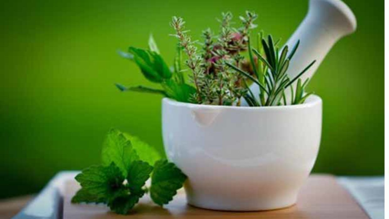 When to start growing herbs