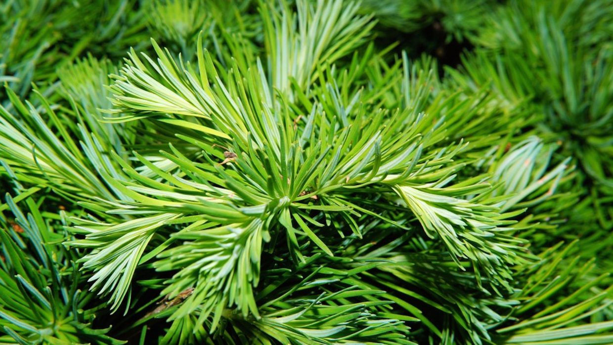 10 TIPS FOR WILDCRAFTING MEDICINAL HERBS